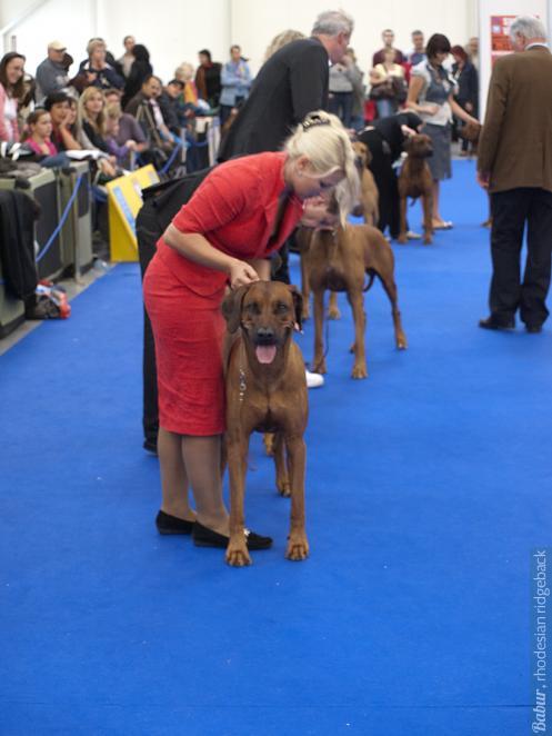 Шестерка лучших риджбеков класса чемпионов, World Dog Show-2009