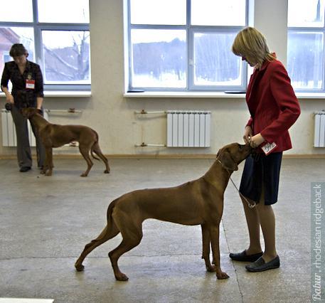 """Онриетта Лилиан на выставке клуба """"Норд"""", январь 2009"""