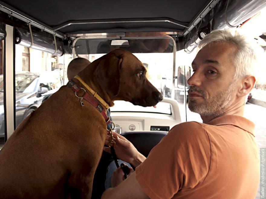 рыжий турист Бабур на автобусной экскурсии