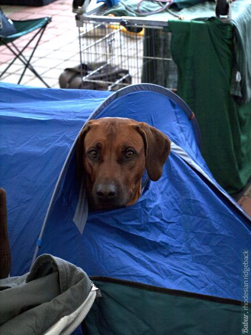 Бабур в палатке