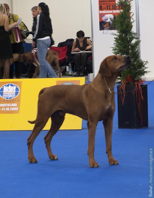 COZO - 4 место в классе чемпионов