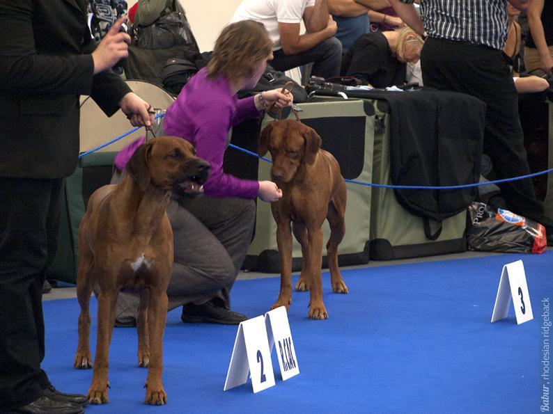 Winners, intermediate class, male
