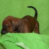 First boy 4 weeks