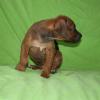 First boy 5 weeks