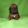 First boy/2 weeks
