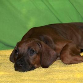 Olivia 9 weeks